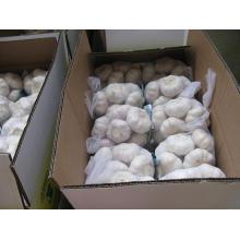 Упаковка коробки Чистый белый чеснок (5,5 см и выше)