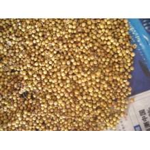 New Crop Coriander Seeds and Powder