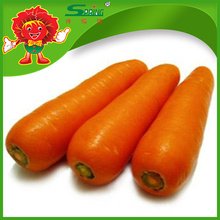 Fresh Red Carrot from China eastern vegetables on sale