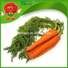 Verduras a granel zanahoria dulce fresca