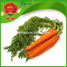 Légumes en vrac carotte douce fraiche