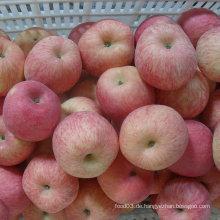 100-113-125 Gute Qualität FUJI Apple