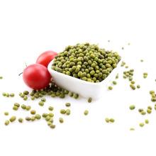 A shortage of market mung bean Natural growth