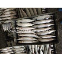 Nueva caballa de pescado (300-500 g)