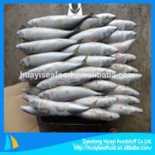 New Coming 300-500g Frozen Pacific Mackerel