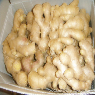 Air Dried Ginger /Price of Dried Ginger /Air Dried Ginger Importers