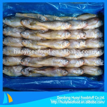 international market price of frozen yellow croaker