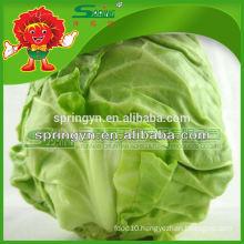fresh Chinese round cabbage
