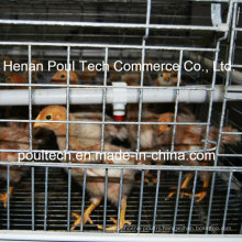 Chick Brood Cage