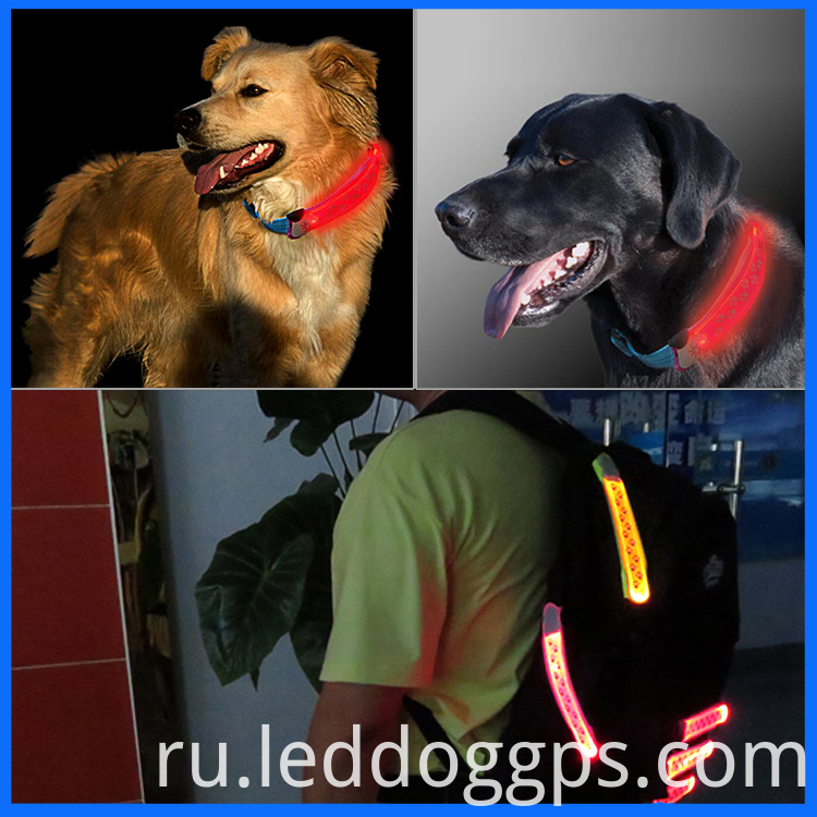 Led Dog Collar Band