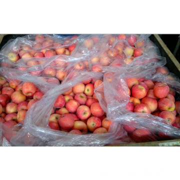 Sweet Chinese FUJI Apples