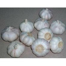 china supplier seed garlic import china garlic