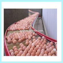 máquina recolectora de huevos popular para jaula de puesta de codornices