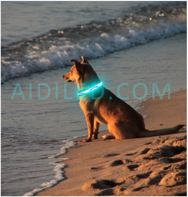 Led Usb Rechargeable Dog Collars