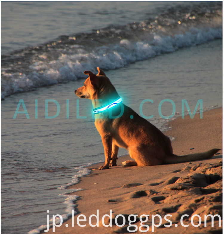 Led Dog Collar Glow
