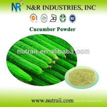 Proveedor de polvo de hierbas Polvo de pepino