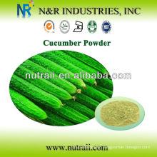 Herbal Powder Supplier Cucumber Powder