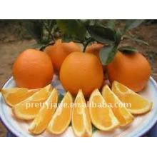 Low price Navel orange in china