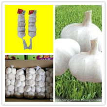 White Fresh Garlic in China