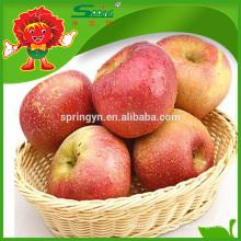 Fuji type pomme de pomme de pommes