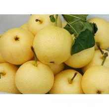2016 Crop Fresh Golden Pear Hot Sale