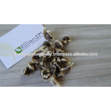 Moringa seeds for cultivation