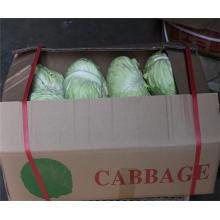 Горячие продажи органического оптовая торговля капусты с отличной цене