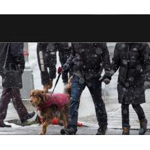 Hundehalsband Leder mit Pufferfeder Schwarz für Comsun Geflochtene Pet Training