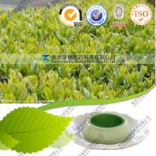 Fabricante Ceremonial Grade Matcha Tea Private Label