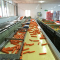 Factory Directly Supply Fresh Carrot