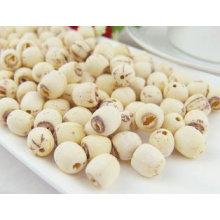 Extracto de raíz de loto 100% natural / extracto de semilla de loto