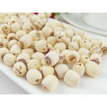 100% Natual Lotus Root Extract / Lotus Seed Extract