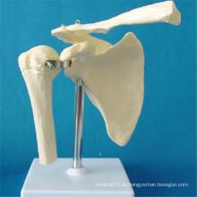 Menschliches Schultergelenk Skelett Anatomisches Modell (R020921)
