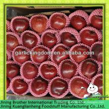China 2013 neue Ernte Huaniu Apfel