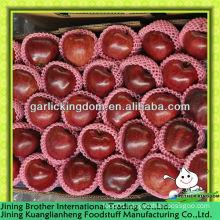 China 2013 new crop huaniu apple