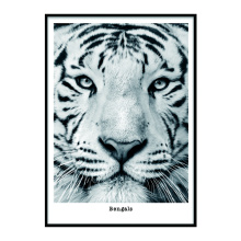 Art cute tiger frame