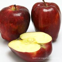 Frische Huaniu Apfel Export in andere Länder