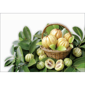 ODM for Natural Extracts Garcinia Cambogia Extract Hydroxycitric Acid supply to Tajikistan Manufacturer