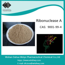CAS: 9001-99-4 Ribonuclease a From Bovine Pancreas