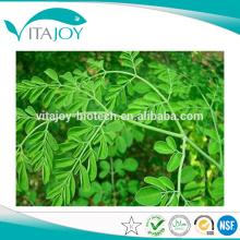 Pure Organic Moringa Blattpulver mit bestem Preis