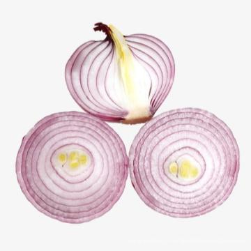 Légumes oignons frais de qualité nouvelle récolte pour la vente en gros
