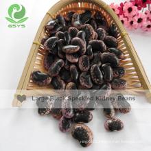 Export large black purple speckled kidney beans