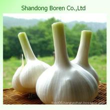 Chinese Fresh White Garlic in Hot Sale