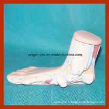 Модель анатомической ножки человека с аномальной ногой (плоскостопие)