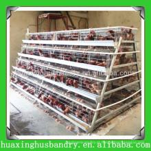 China popular e boa qualidade camada de aves de capoeira