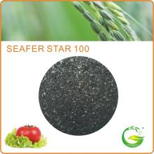 Bio extrato de algas orgânicas Fertilizante