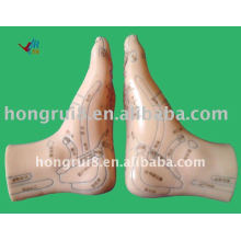 HR-515B acupuncture foot model12CM,acupuncture foot