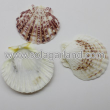 36-45MM Drilled Sea Shell Beads Striped Venus Clam Beads