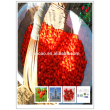 Ningxia organic goji berries with Kosher and Halal certificates red medlar