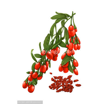 biggest red goji berries top quality wolfberry